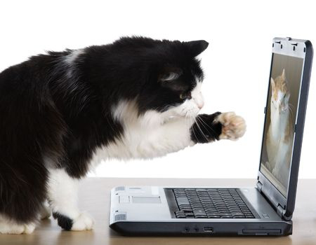 cat video chatting with another cat on a laptop