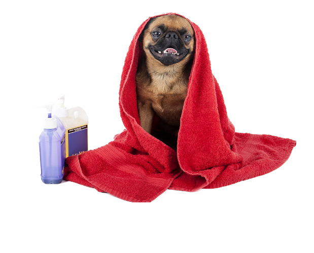 dog smiling while wrapped with towel